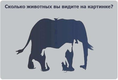 Сколько животных вы видите на картинке?